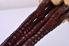 Το τμήμα ριζωμάτων του lucidum Ganoderma Στοκ Φωτογραφία
