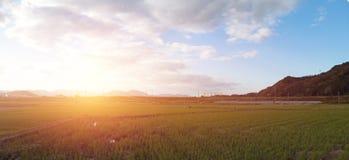 Το τοπίο άποψης πανοράματος του τομέα ρυζιού και το βουνό κυμαίνονται στο υπόβαθρο ηλιοβασιλέματος στην Ιαπωνία Στοκ Εικόνες