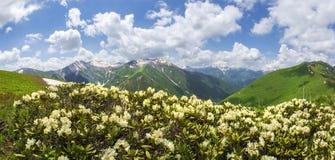 Το τοπίο βουνών με rhododendrons ανθίζει την ηλιόλουστη θερινή ημέρα σε Svaneti, Γεωργία στοκ εικόνες με δικαίωμα ελεύθερης χρήσης