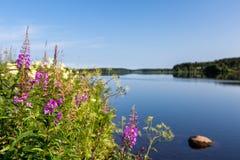 Το τοπίο με τον ποταμό και τα λουλούδια στο πρώτο πλάνο στοκ φωτογραφία με δικαίωμα ελεύθερης χρήσης