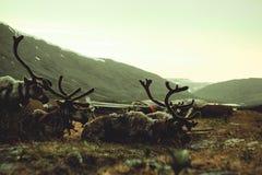 Το τοπίο Ουραλίων Τοπίο της Ρωσίας βουνά ural τάρανδος στοκ εικόνες