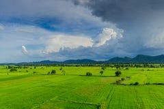 Το τοπίο του τομέα ρυζιού προτού να βρέξει στοκ φωτογραφίες με δικαίωμα ελεύθερης χρήσης