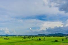 Το τοπίο του τομέα ρυζιού προτού να βρέξει στοκ φωτογραφία με δικαίωμα ελεύθερης χρήσης