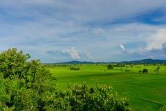 Το τοπίο του τομέα ρυζιού προτού να βρέξει στοκ εικόνες με δικαίωμα ελεύθερης χρήσης