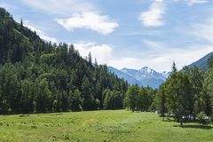 Το τοπίο των βουνών Altai με την κορυφογραμμή Βορράς-Chuya στο υπόβαθρο, το καλοκαίρι, Σιβηρία, Δημοκρατία βουνών Altai στοκ εικόνες