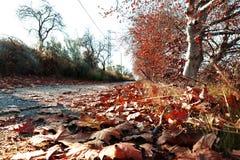 Το τοπίο φθινοπώρου, ξεραίνει τα φύλλα στο έδαφος Στοκ Εικόνες