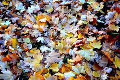 Το τοπίο φθινοπώρου, ξεραίνει τα φύλλα Στοκ φωτογραφίες με δικαίωμα ελεύθερης χρήσης