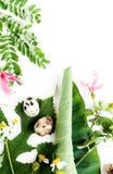 Το τοπ επίπεδο άποψης βάζει τα εν μέρει απομονωμένα camomile λουλούδια και τα φύλλα με τα αυγά ορτυκιών στη χλεύη φωλιών εγγράφου Στοκ εικόνες με δικαίωμα ελεύθερης χρήσης