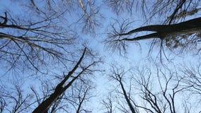 Το τρομερό δάσος φθινοπώρου οι κορυφές των δέντρων αντέχει ενάντια στο μπλε ουρανό απόθεμα βίντεο