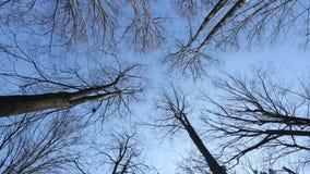 Το τρομερό δάσος φθινοπώρου οι κορυφές των δέντρων αντέχει ενάντια στο μπλε ουρανό φιλμ μικρού μήκους