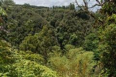 Το τροπικοί τροπικό δάσος και ο καταρράκτης στο Akaka πέφτουν κρατικό πάρκο στο μεγάλο νησί της Χαβάης Στοκ Εικόνες