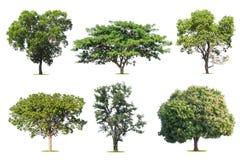 το τροπικό δέντρο συλλογής απομονώνει στο λευκό Στοκ Φωτογραφίες