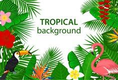 Το τροπικό τροπικό δάσος ζουγκλών φυτεύει τα πουλιά λουλουδιών, φλαμίγκο, toucan υπόβαθρο Στοκ εικόνες με δικαίωμα ελεύθερης χρήσης