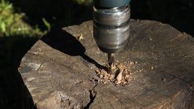 Το τρυπάνι τρυπά το ξύλο με τρυπάνι απόθεμα βίντεο