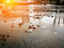 Το τσιμεντένιο πάτωμα με τα ξηρά φύλλα μετά από τη θύελλα βροχής στοκ εικόνα με δικαίωμα ελεύθερης χρήσης