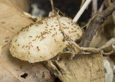 Το τσιπ φωλιών μυρμηγκιών τρώει φέρνει τη ζωική εγχώρια έννοια εντόμων Στοκ εικόνα με δικαίωμα ελεύθερης χρήσης