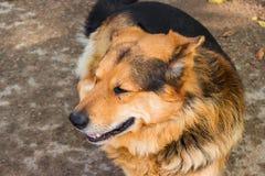 Το τσοπανόσκυλο βρίσκεται στο έδαφος στοκ φωτογραφίες με δικαίωμα ελεύθερης χρήσης