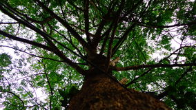 Το τύμπανο κολλά το δέντρο Στοκ Φωτογραφίες