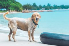 Το υγρό σκυλί στην παραλία Στοκ Εικόνες