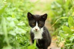 Το λυπημένο γατάκι κάθεται από την πλευρά χλόης Στοκ Εικόνα