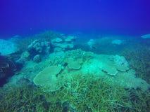 Το υποβρύχιο τοπίο, βυθός που χαράζεται κοντά πρήζεται στο σκόπελο, νησί Huahine, Ειρηνικός Ωκεανός Στοκ Φωτογραφίες