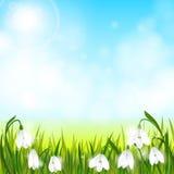 Το υπόβαθρο άνοιξη με τα λουλούδια snowdrop, πράσινη χλόη, καταπίνει και μπλε ουρανός ελεύθερη απεικόνιση δικαιώματος