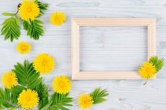 Το υπόβαθρο άνοιξη του κενού ξύλινου πλαισίου, κίτρινη πικραλίδα ανθίζει, νέα πράσινα φύλλα στον ανοικτό μπλε ξύλινο πίνακα Στοκ εικόνες με δικαίωμα ελεύθερης χρήσης