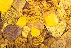Το υπόβαθρο από το φθινόπωρο ζωηρόχρωμο τα φύλλα Στοκ εικόνα με δικαίωμα ελεύθερης χρήσης