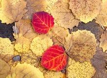 Το υπόβαθρο από το φθινόπωρο ζωηρόχρωμο τα φύλλα Στοκ εικόνες με δικαίωμα ελεύθερης χρήσης