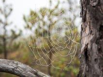 Το υπόβαθρο κινηματογραφήσεων σε πρώτο πλάνο Ιστού αραχνών (ιστός αράχνης) Στοκ φωτογραφία με δικαίωμα ελεύθερης χρήσης