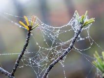 Το υπόβαθρο κινηματογραφήσεων σε πρώτο πλάνο Ιστού αραχνών (ιστός αράχνης) Στοκ Φωτογραφίες