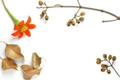 Το υπόβαθρο με το λουλούδι, ξεραίνει τα φύλλα και τους κλάδους Στοκ Φωτογραφία