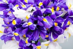 Το υπόβαθρο λουλουδιών της Iris, αναπηδά floral patern Στοκ Εικόνες