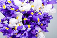 Το υπόβαθρο λουλουδιών της Iris, αναπηδά floral patern Στοκ Εικόνα