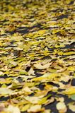 Το υπόβαθρο σύστασης με βγάζει φύλλα στοκ εικόνες