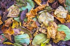 Το υπόβαθρο του φθινοπώρου βγάζει φύλλα Στοκ φωτογραφία με δικαίωμα ελεύθερης χρήσης