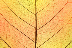 Το υπόβαθρο του φθινοπώρου χρωματίζει τη δομή κυττάρων φύλλων - φυσικό textur Στοκ Φωτογραφίες