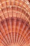 Το υπόβαθρο των θαλασσινών κοχυλιών του μαλακίου, κλείνει επάνω Στοκ φωτογραφία με δικαίωμα ελεύθερης χρήσης