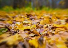 Το υπόβαθρο φθινοπώρου, φύλλα θολώνει τη θαμπάδα επίδρασης στις άκρες, φυσικό σχέδιο Στοκ Εικόνες