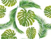Φύλλα καρύδων Στοκ Φωτογραφία