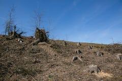 Το υπόλοιπο των κολοβωμάτων δέντρων Στοκ φωτογραφία με δικαίωμα ελεύθερης χρήσης