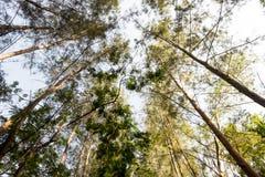 Το υψηλό δάσος στη φύση Στοκ Φωτογραφίες