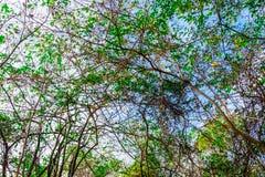 Το υψηλό δάσος στη φύση Στοκ φωτογραφία με δικαίωμα ελεύθερης χρήσης