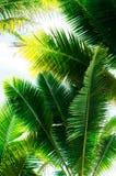 το υψηλό jpg βγάζει φύλλα τη διάλυση φοινικών Στοκ Εικόνες