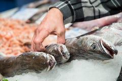 Το Φίσερ παίρνει ένα μεγάλο ψάρι για να πωλήσει Στοκ Εικόνες