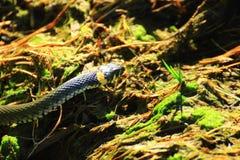 Το φίδι γλιστρά στοκ εικόνα