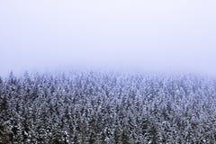 Το φανταστικό τοπίο του δάσους πεύκων κάλυψε με το χιόνι και θολώνει du στοκ εικόνα