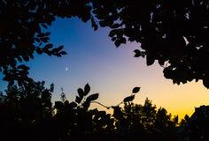 Το φεγγάρι μέσω των δέντρων Στοκ φωτογραφία με δικαίωμα ελεύθερης χρήσης