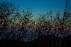 Το φεγγάρι πίσω από τα δέντρα Στοκ Φωτογραφία