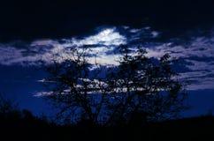 Το φεγγάρι στη νύχτα Στοκ εικόνες με δικαίωμα ελεύθερης χρήσης